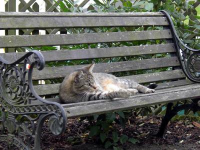 Gartenbank mit Katze