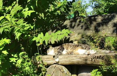 Sonniges Plätzchen auf der Gartenbank