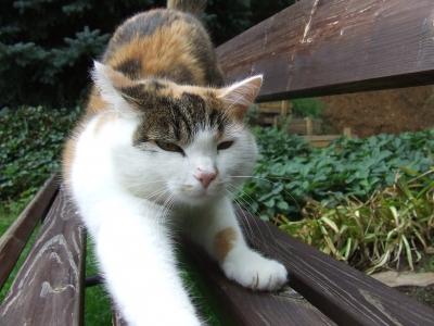 Katze streckt sich auf Holzgartenbank