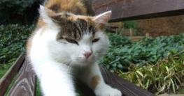Katze auf Gartenbank